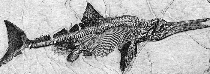 http://static-www.icr.org/i/articles/af/intriguing_ichthyosaur_wide.jpg