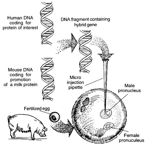 Production of Therapeutic Proteins by Genetic Engineering