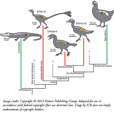 [Image: fossil_egg_chart.jpg]
