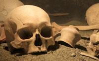 Human Remains in Spain: Neandertal or Not?