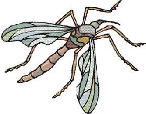 Parasitic Mosquito
