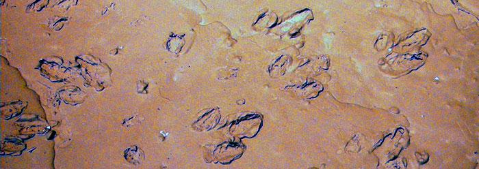 Radaractive Dinosaur Tracks Intelligent Evidence For Noah S Flood