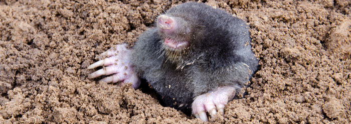 Above Ground Moles http://www.icr.org/article/7302/